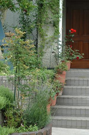 roses2012618-5.jpg