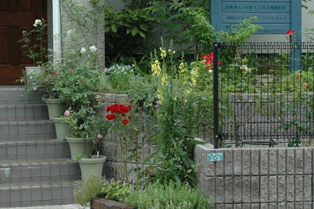 roses2012624-2.jpg