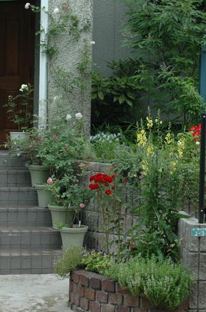 roses2012624-3.jpg