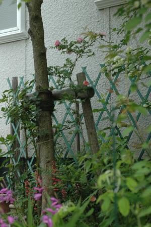 sanshoubara2012509-3.jpg