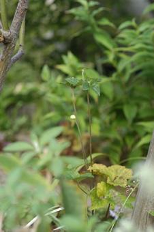 shumeigiku2010912.jpg