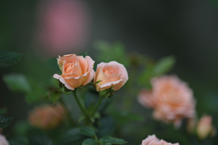 sweetdream2012518-2.jpg