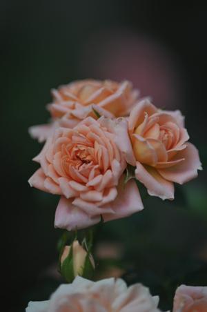 sweetdream2012518-3.jpg