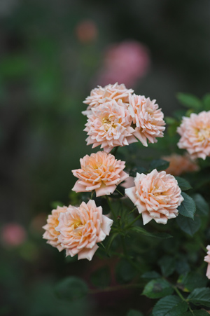 sweetdream2012522-1.jpg