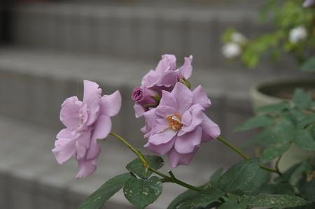 tasogare2012525.jpg