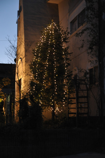 tree2010-3.jpg