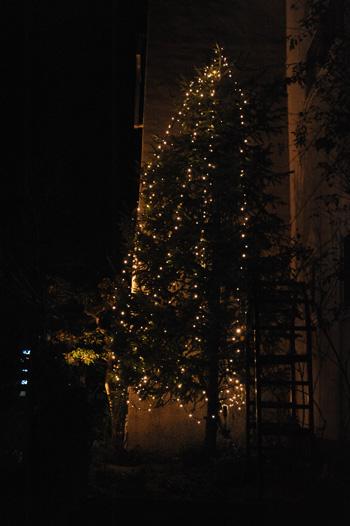 tree2010-5.jpg