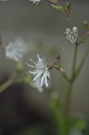 whiterobin2012430-2.jpg