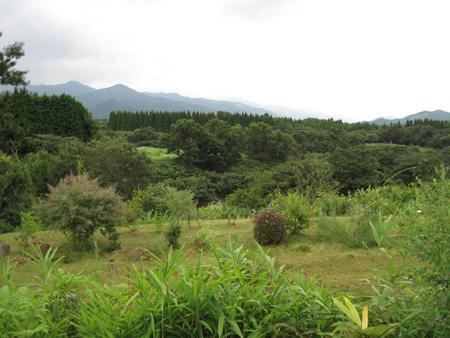 yamagarden2010907d.jpg