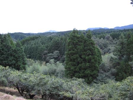 yamagarden2010907e.jpg