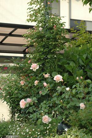 zenkei2012517-14a.jpg