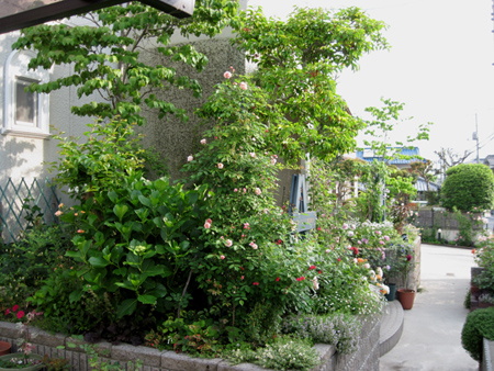 zenkei2012517-1a.jpg