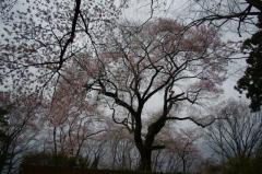 2012沼田城03