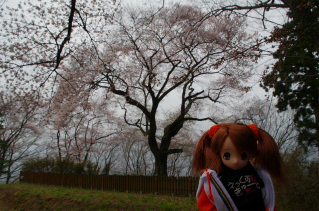 2012沼田城01
