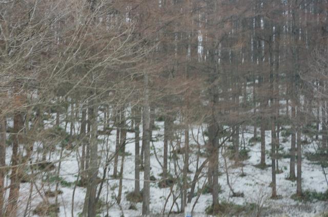2012沼田城28