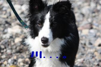 犬連れ巾着田2