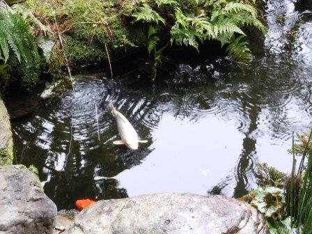 池と鯉(2011.03.06)