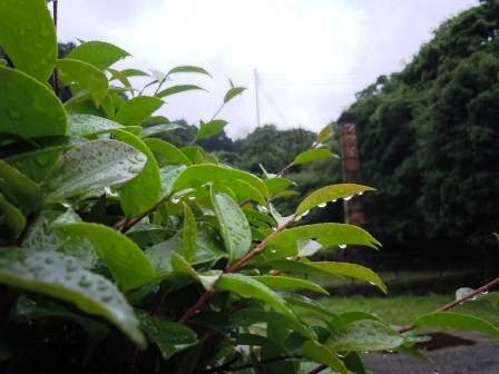 雨の土曜日(2011-05-28)