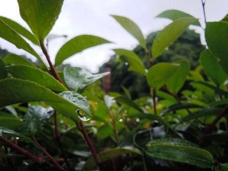 雨の土曜日4(2011-05-28)