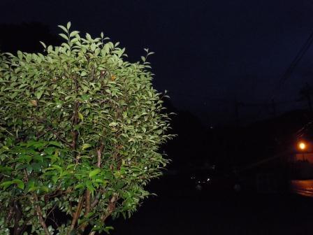 雨の土曜日8(2011-05-28)