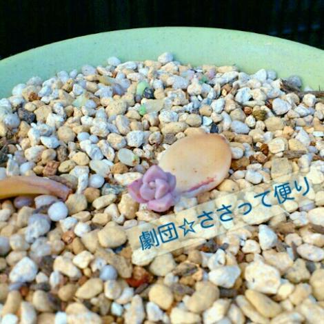labelbox_20120504173618_A0.jpg