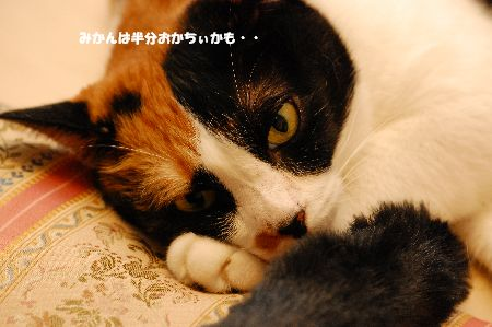 20100818mikan.jpg