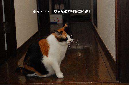 20101013mikan.jpg