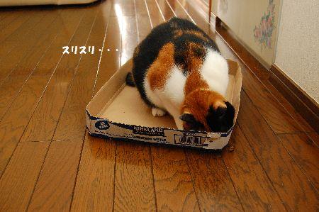 20101109mikan4.jpg