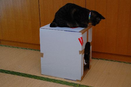20101118mikankotetsu.jpg