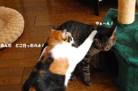 20101123mikankotetsu4.jpg