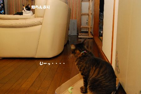 20101204mikankotetsu.jpg