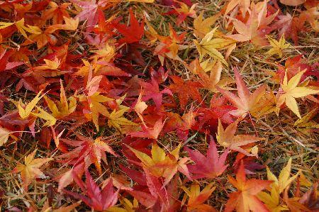 20101206yonezawa2.jpg