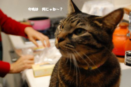 20101212kotetsu.jpg