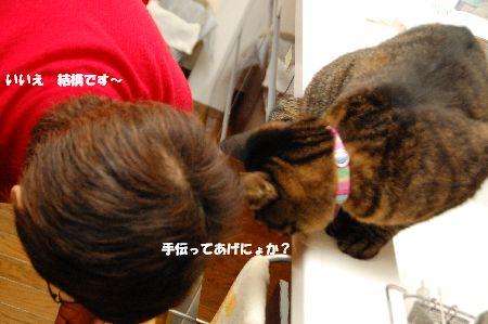 20101212kotetsu2.jpg