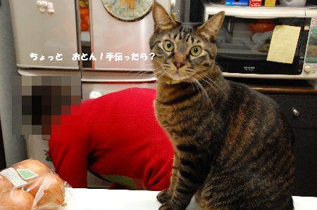 20101212kotetsu3.jpg