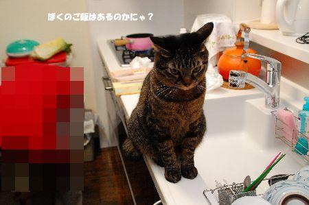 20101212kotetsu4.jpg