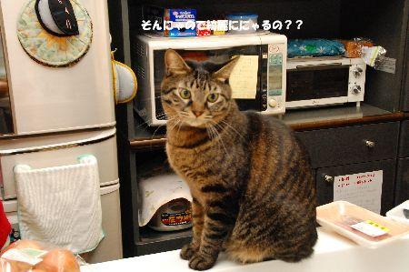 20101213kotetsu.jpg