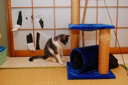 20111029kotetsumiikun.jpg