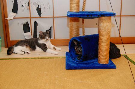 20111029kotetsumiikun4.jpg