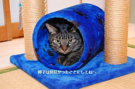 20111029kotetsumiikun5.jpg