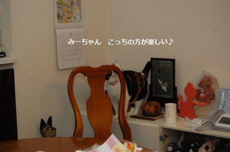 20111102mikan.jpg