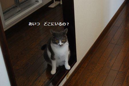 20111114miikun.jpg