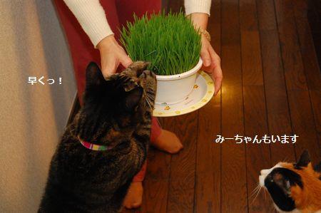 20111114mikankotetsu.jpg