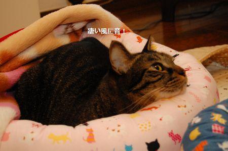 20111119kotetsu.jpg