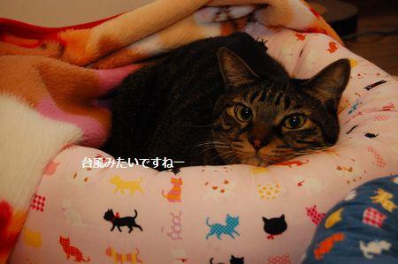 20111119kotetsu3.jpg