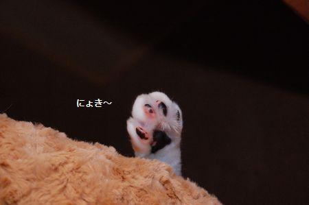 20111121mikan.jpg