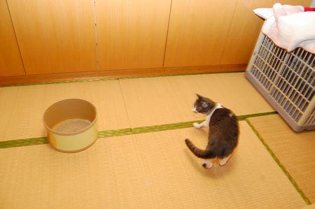 20111127miikun2.jpg