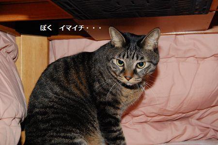 20111210kotetsu.jpg