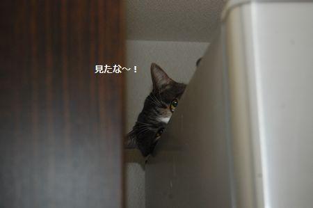 20111216miikun2.jpg