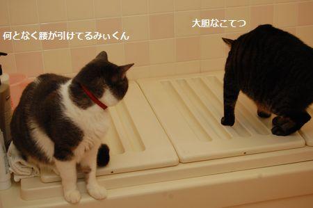 20120111kotetsumiikun2.jpg